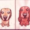 suzies-dogs