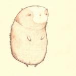 boko-guinnea-pig-small