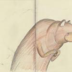 bear-in-sketchbook